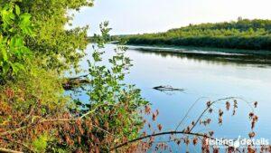 Рыбалка на Десне / Затопленное дерево
