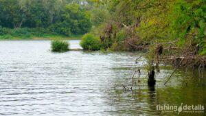 Рыбалка на Десне 2021 - Крепкие места