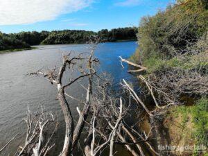Рыбалка на Десне 2021 - Завал из деревьев