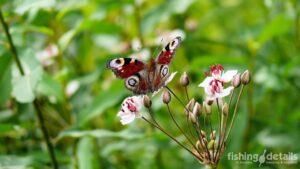 Рыбалка на Десне 2021 - Бабочка